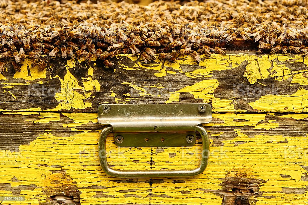Beehive, carrying handle hive royalty-free stock photo