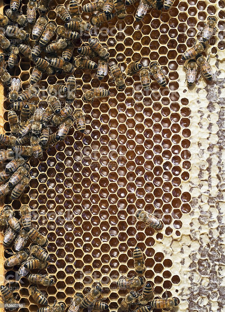 Beehive honeycomb detail - bees, honey, cells, wax. Apiculture. stock photo