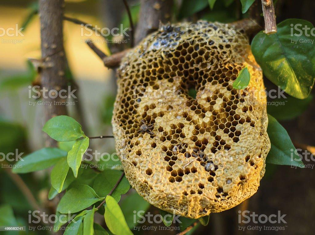 beehive honeycomb stock photo