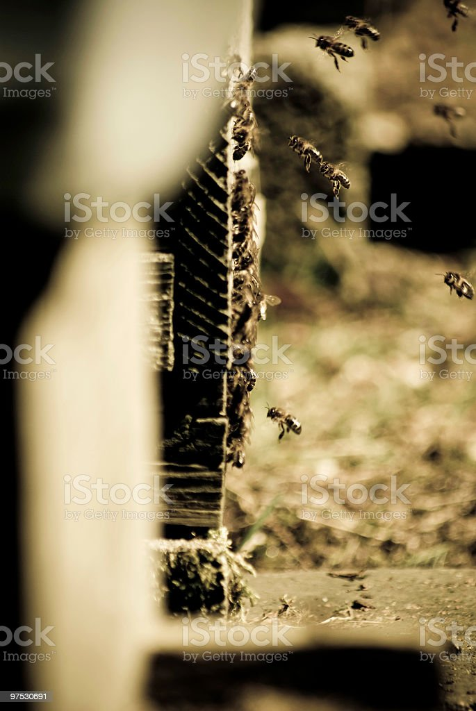 Beehive in apiary with returning bees flying royalty-free stock photo