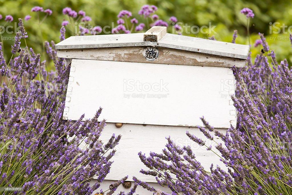 Beehive in Lavender stock photo