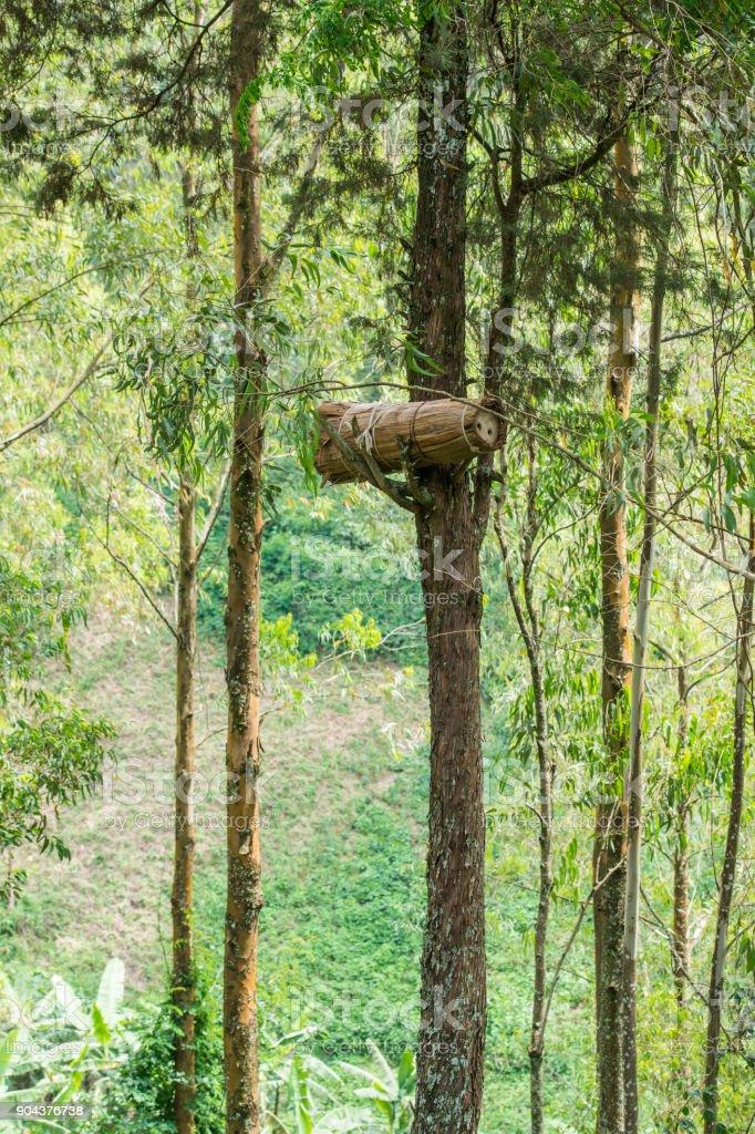 Beehive in the trees, Rwanda, Africa stock photo