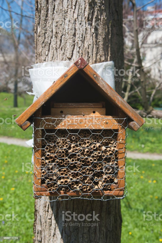 Bienenstock auf einem Baum – Foto