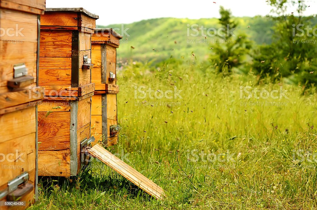 Beehive with bees royalty-free stock photo
