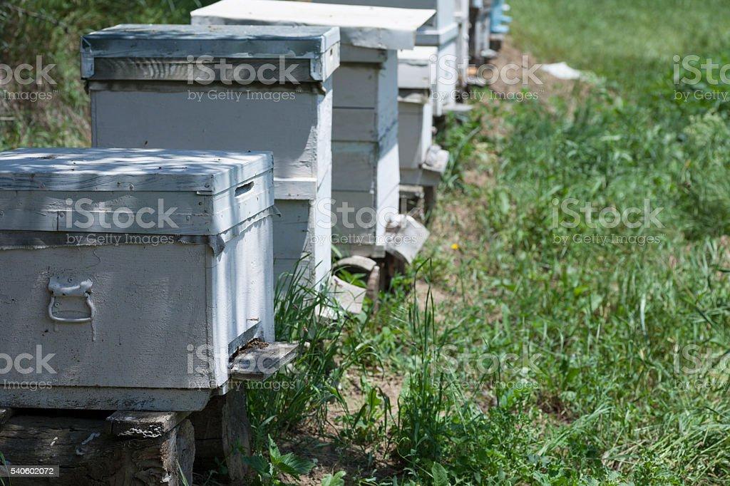 beehives in garden stock photo