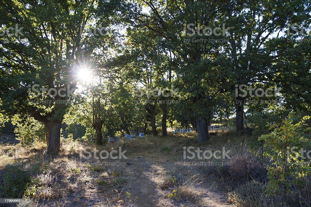 한 벌 (Oak Grove-Colmenas en Robledal royalty-free 스톡 사진