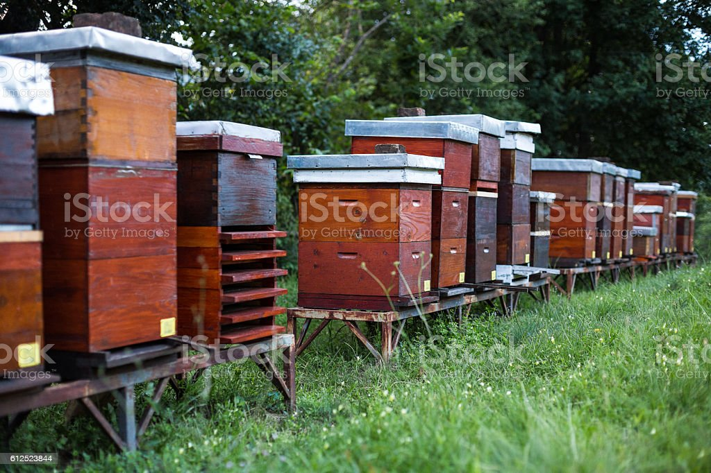 Beehives in the backyard stock photo