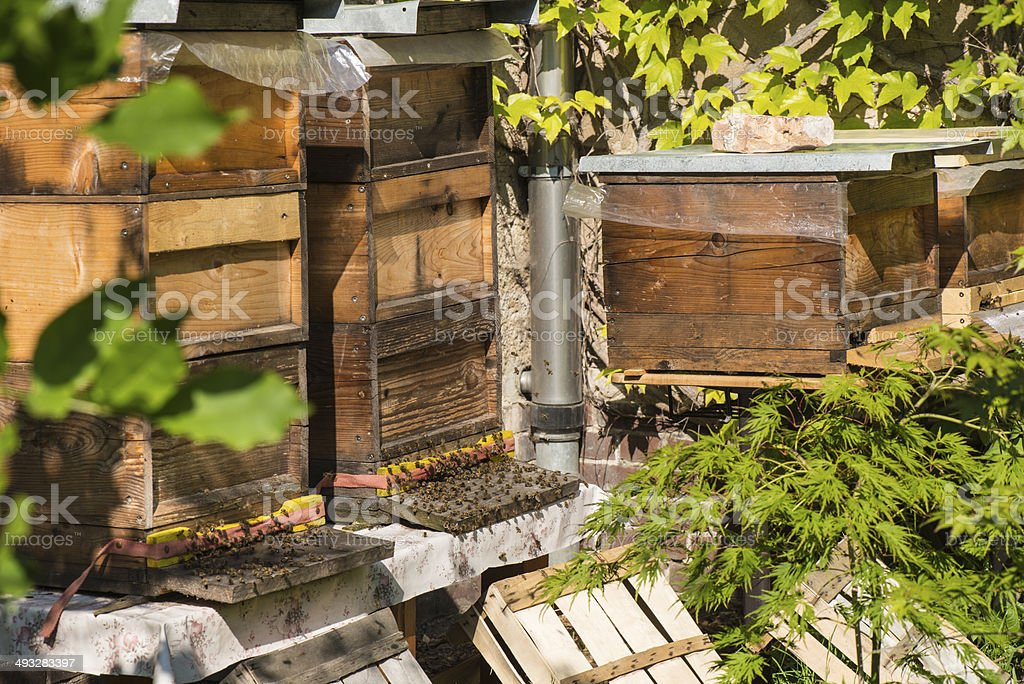 Beehives in urban surrounding stock photo