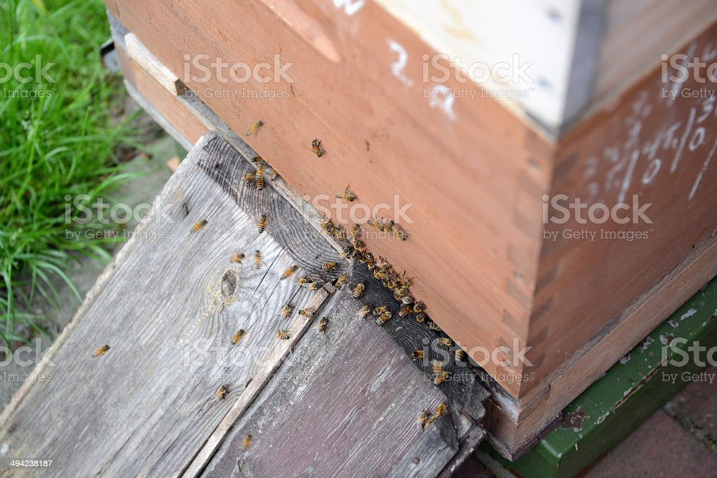Beehives royalty-free stock photo