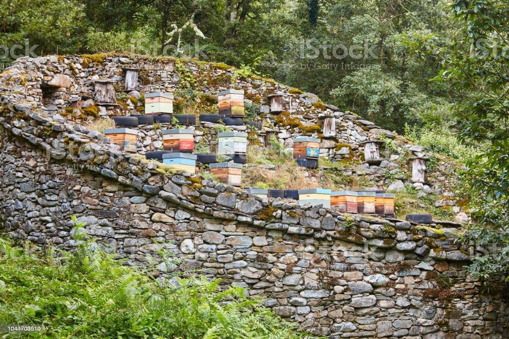 Bienenstöcke. Traditionelle Steinmauer Struktur gegen Bären. Muniellos, Asturien – Foto