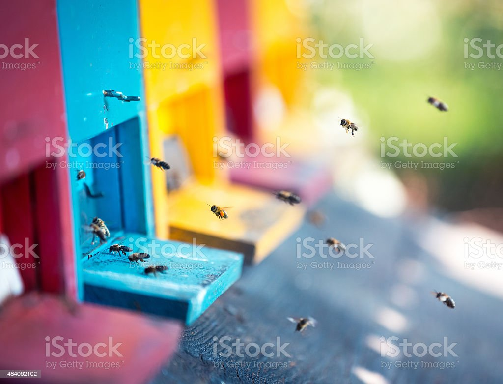 Beehives avec Flying abeilles - Photo
