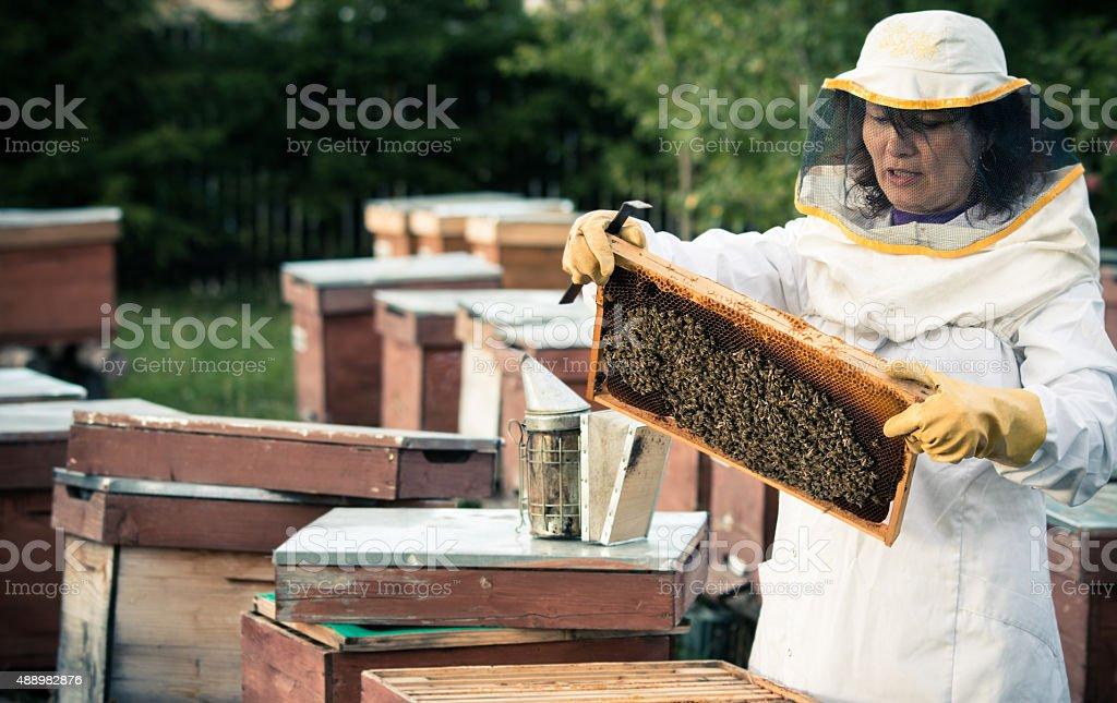 Beekeeper 2 stock photo