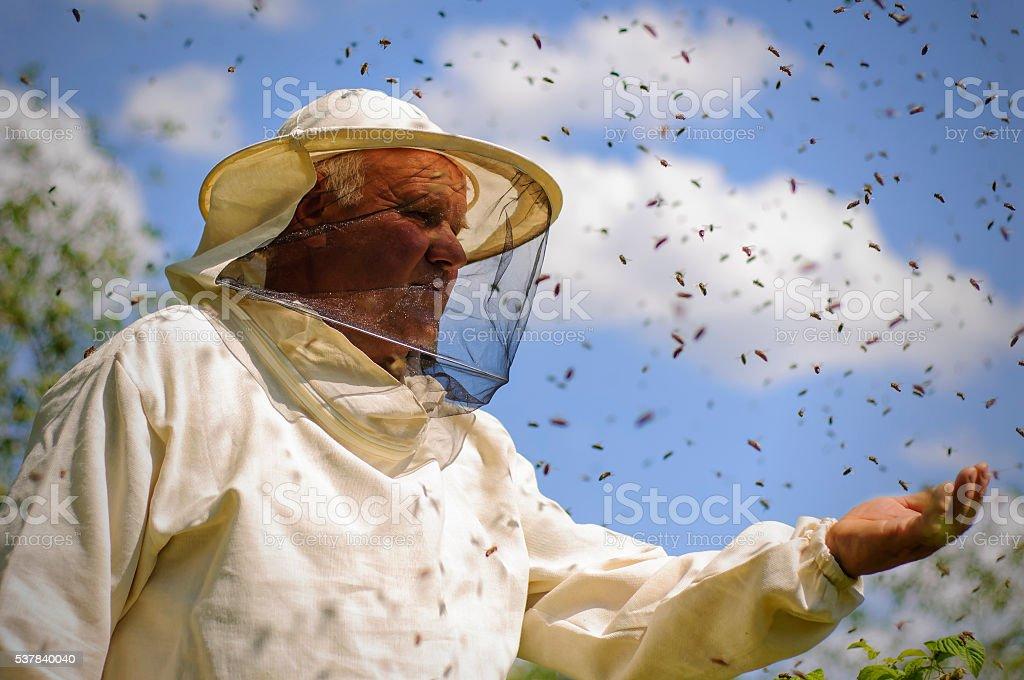 beekeeper and bee swarm stock photo