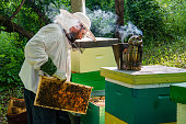 Beekeeper at Work. Bee keeper lifting shelf out of hive. The beekeeper saves the bees.
