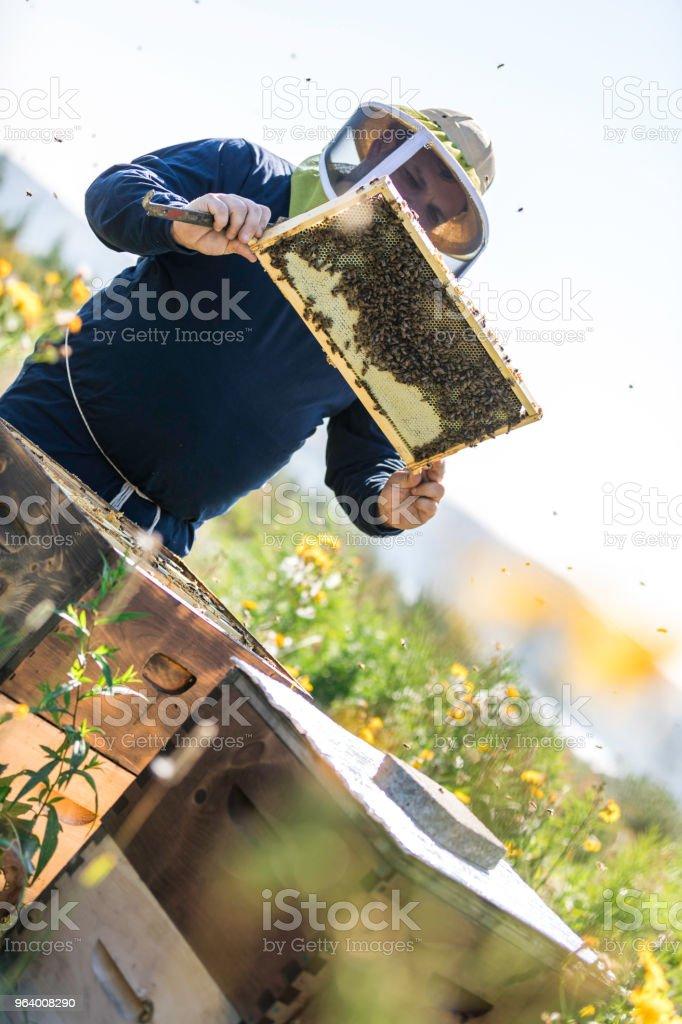 仕事、清掃とハイブを検査で養蜂家 - 1人のロイヤリティフリーストックフォト
