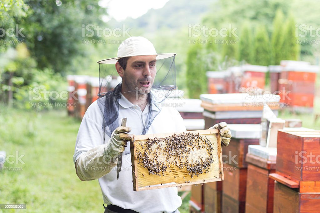 Beekeeper checking a beehive royalty-free stock photo