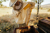 Photo of a beekeeper in apiary, checking his beehives