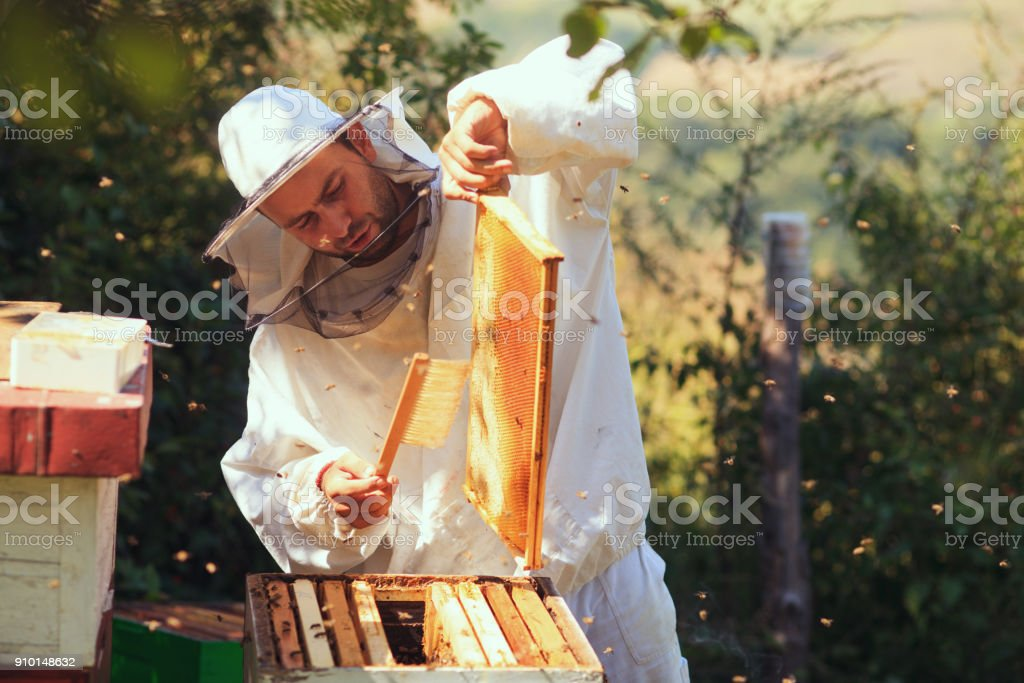 Sammeln von Honig Imker – Foto