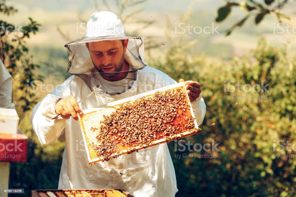 Beekeeper collecting honey selective focus on a honeycomb and bees stock photo