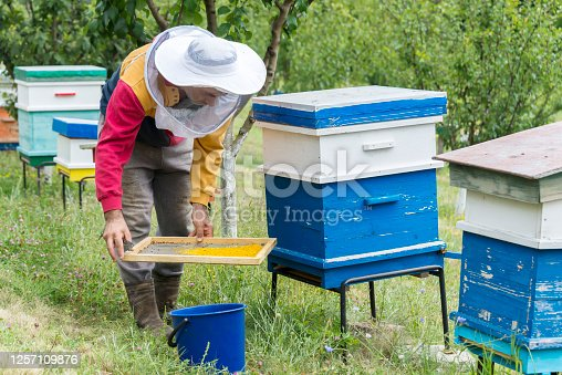 A beekeeper collects pollen, takes care of the hives