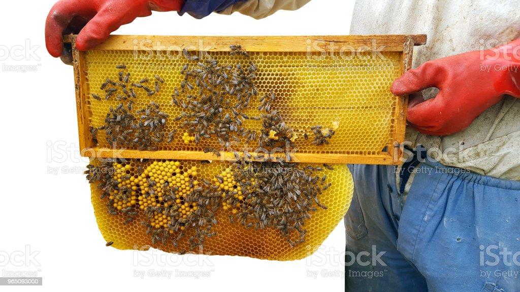 Beekeeper cuts wax off from honeycomb frame zbiór zdjęć royalty-free