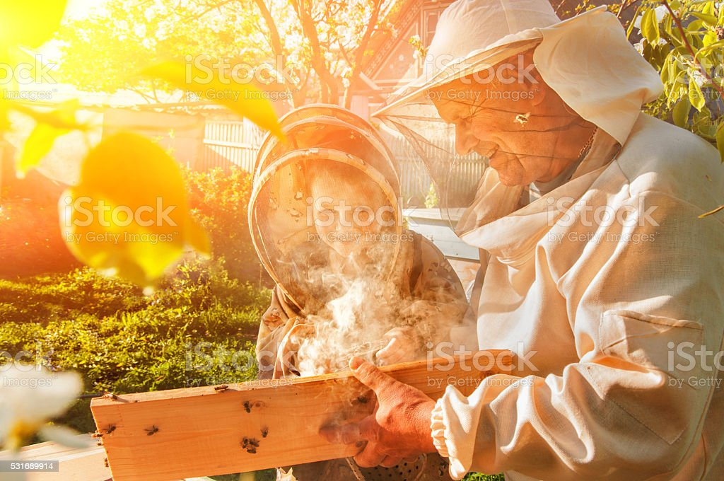 beekeeper grandfather and grandson examine a hive of bees stock photo