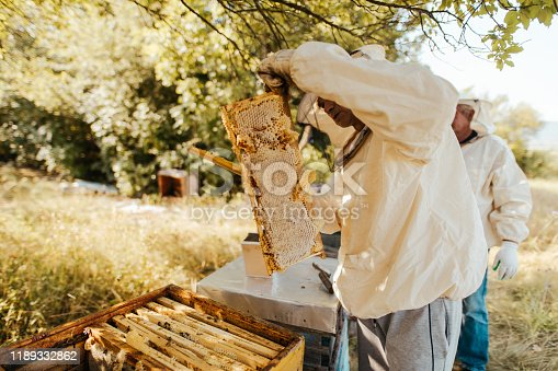 Photo of a beekeeper, holding a honeycomb
