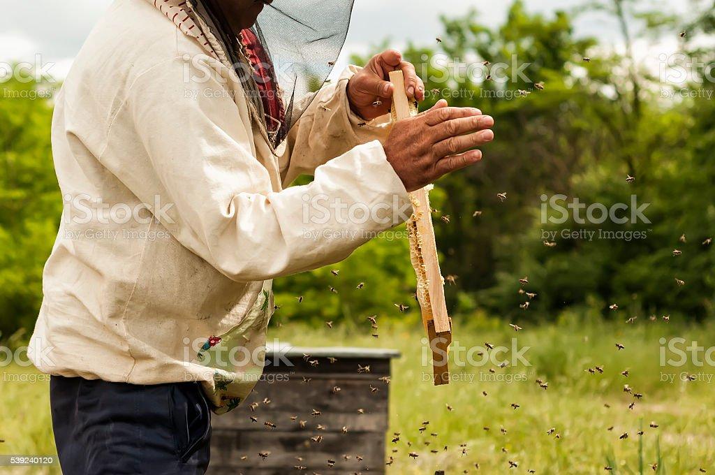 Apicultor bastidor de retención de panal con abejas foto de stock libre de derechos