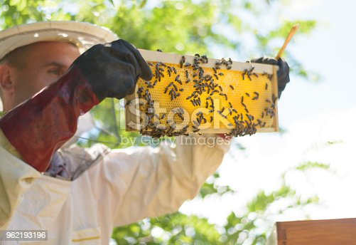 Man looking in bees. Farmer working with honeycomb. Apiculture.