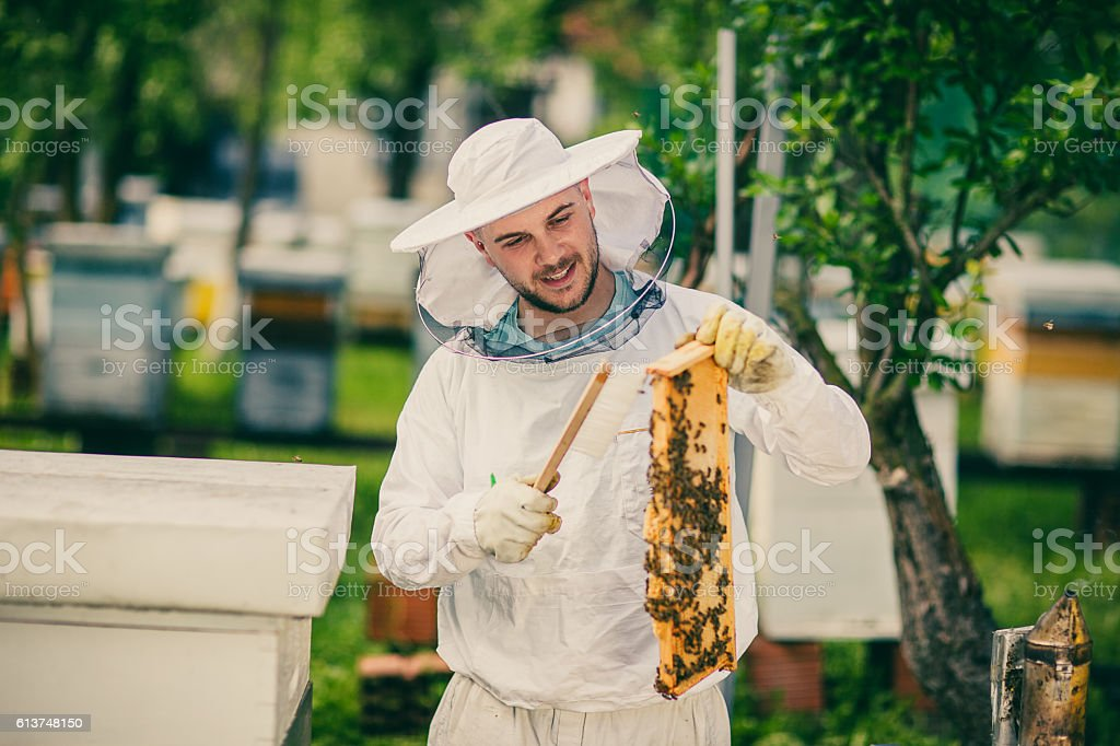 Beekeeper in uniform at work stock photo