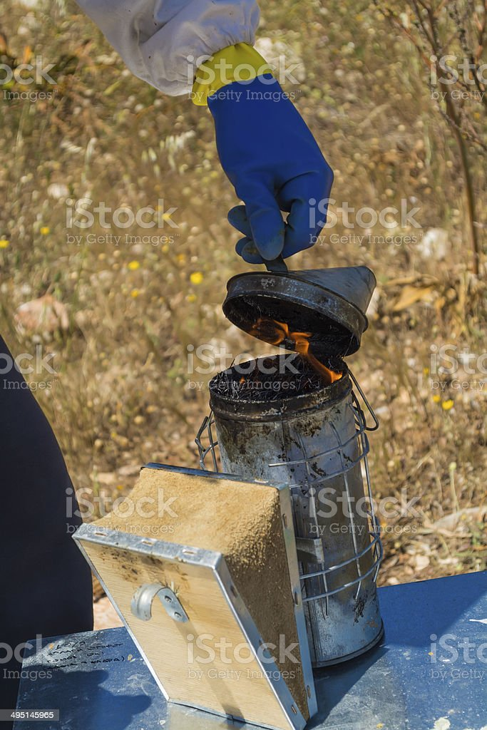 beekeeper lights up a bee smoker stock photo