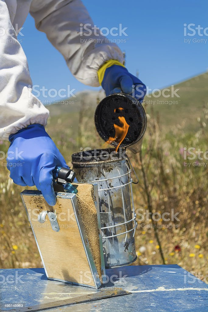 beekeeper lights up a bee-smoker stock photo
