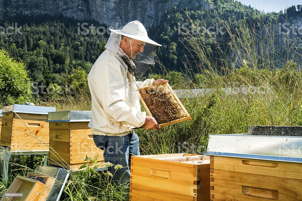 beekeeper looking at honeycomb stock photo