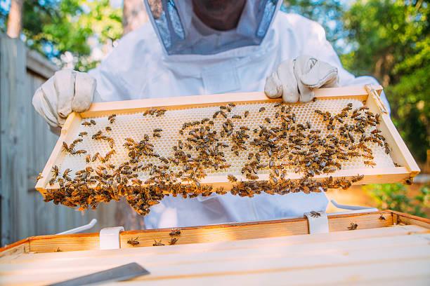 imker  - bienenstock stock-fotos und bilder