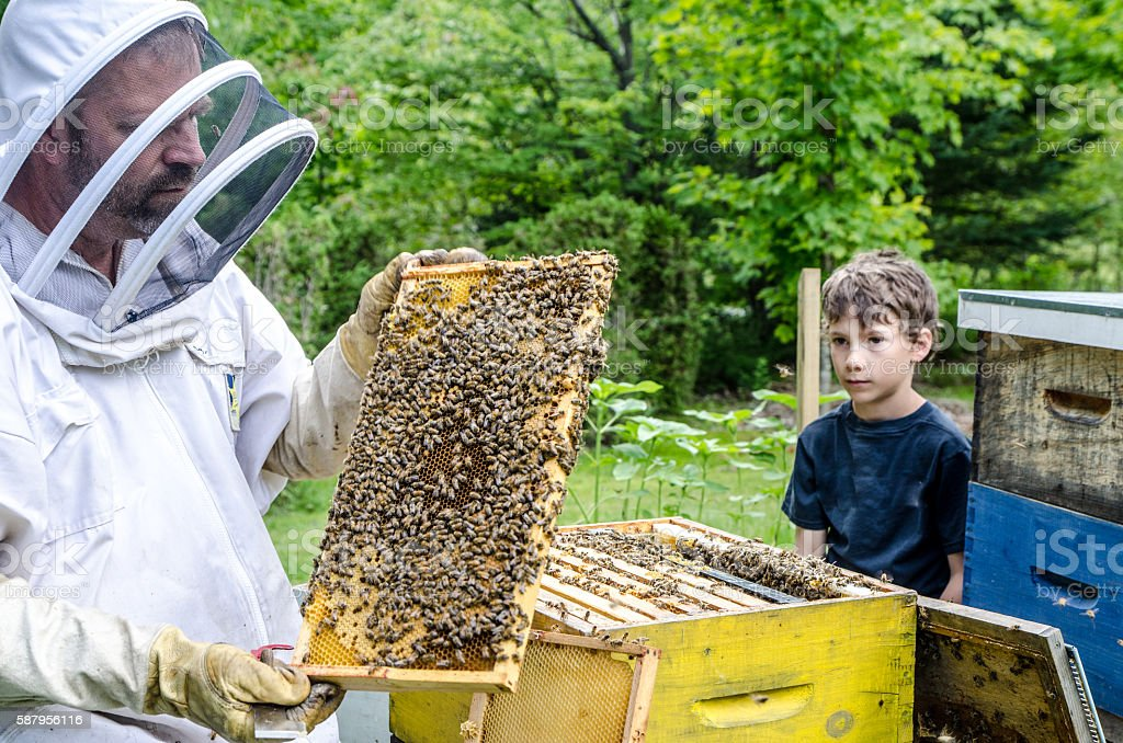 Beekeeper showing to little boy frame full of bees stock photo