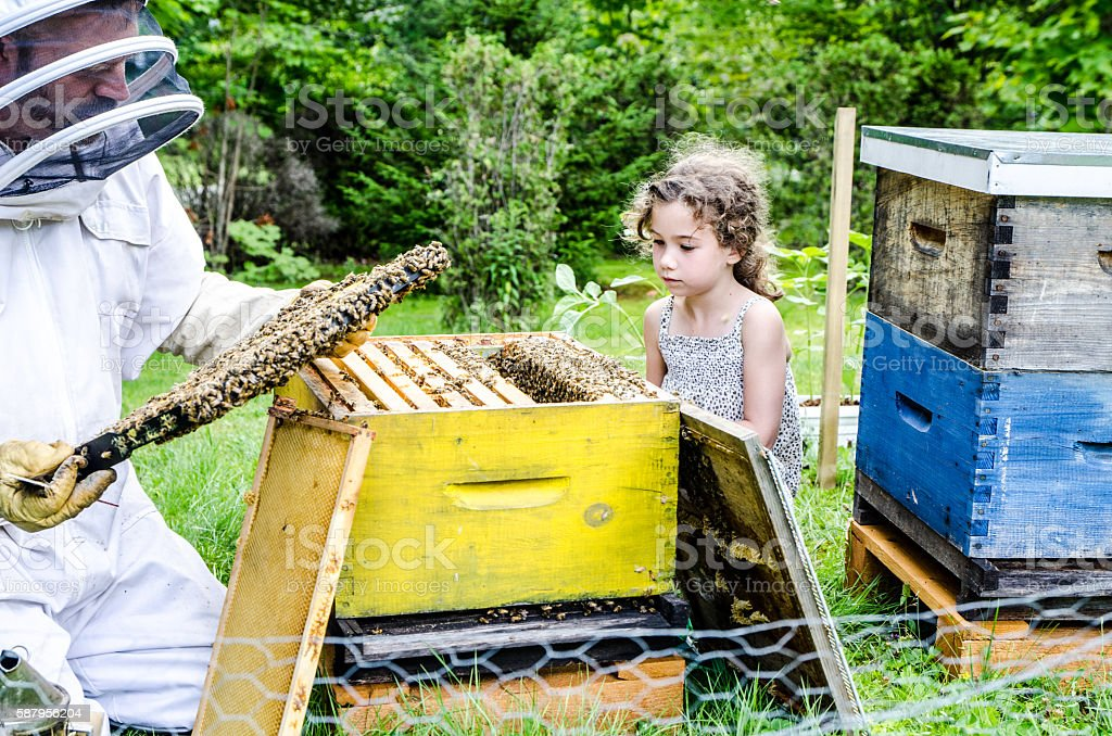 Beekeeper showing to little girl frame full of bees stock photo