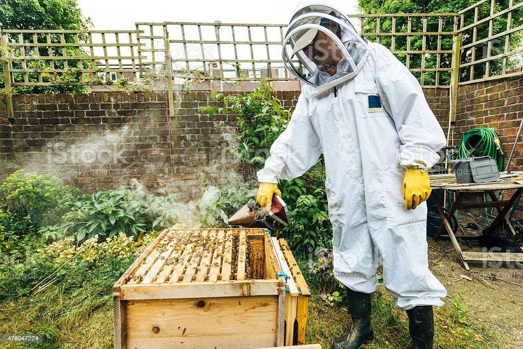 Beekeeper smoking beehives stock photo