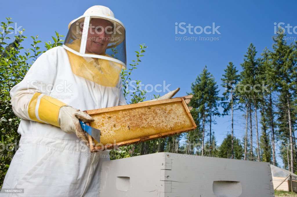 Beekeeper Taking Out HoneyComb To Harvest Honey stock photo