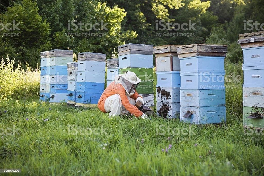 Beekeeper Tending Beehives royalty-free stock photo