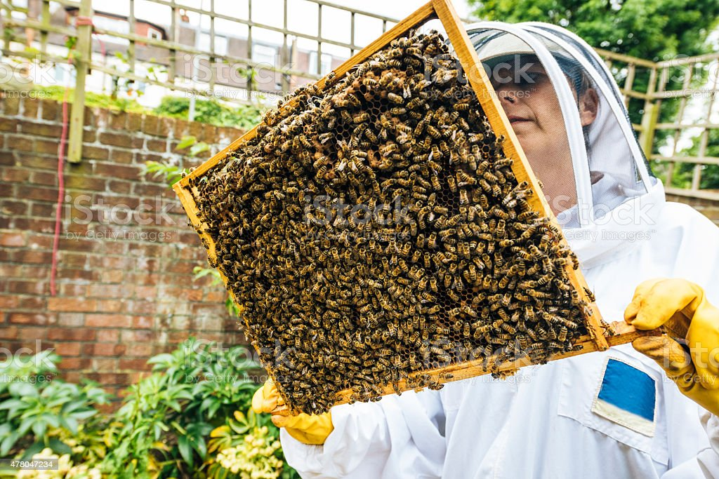 Beekeeper with bees and honeycomb stock photo