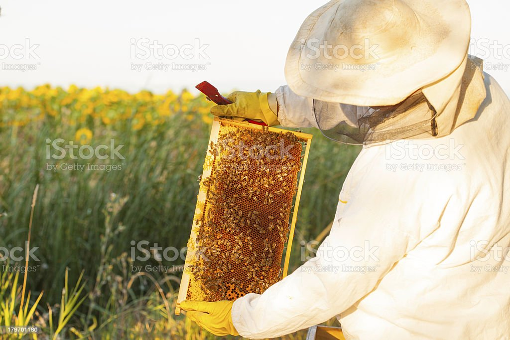 beekeeper with honey royalty-free stock photo