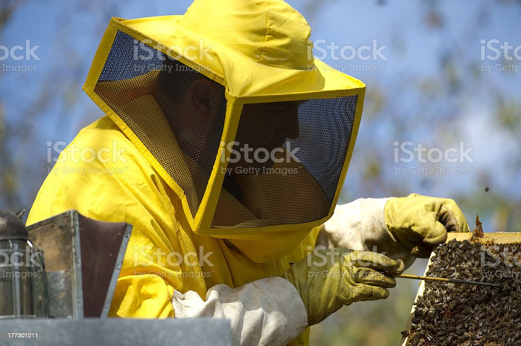 Beekeeper With Honeycomb royalty-free stock photo