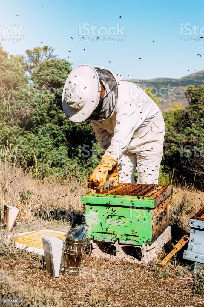Beekeeper working collect honey. stock photo