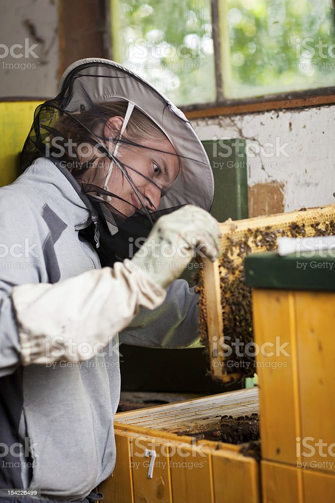 Beekeeper working in an apiary royalty-free stock photo