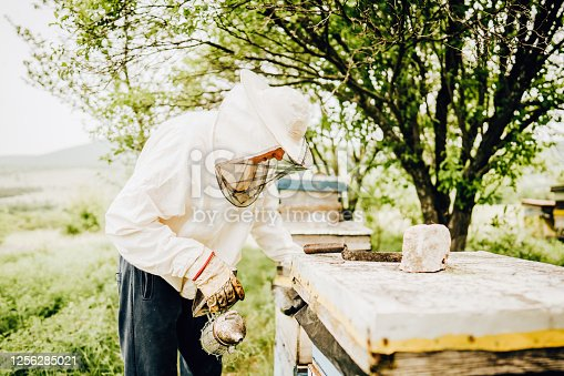 Photo of a beekeeper working in apiary