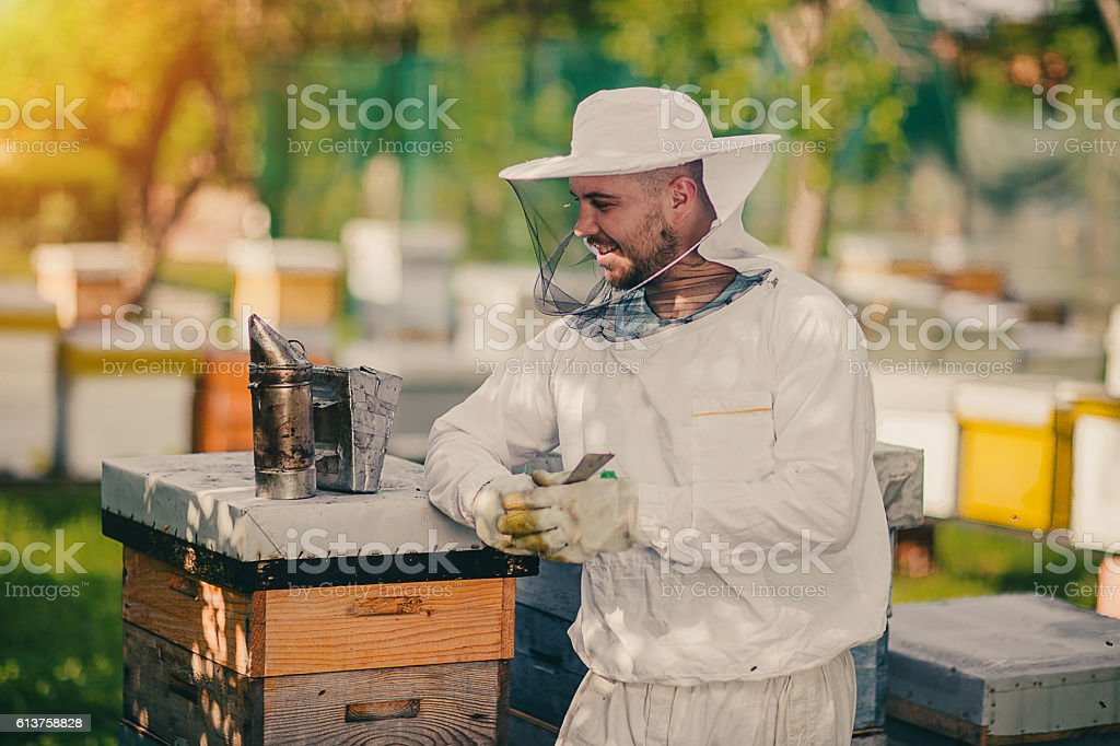 Beekeeper working with bees stock photo