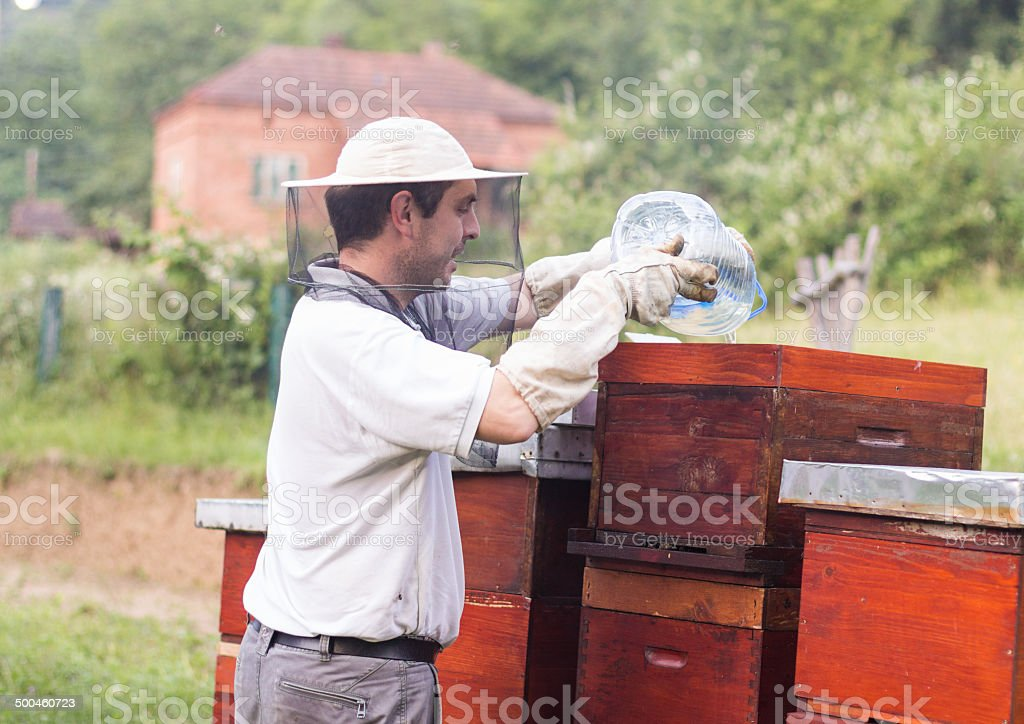 Beekeeper works at his apiary royalty-free stock photo