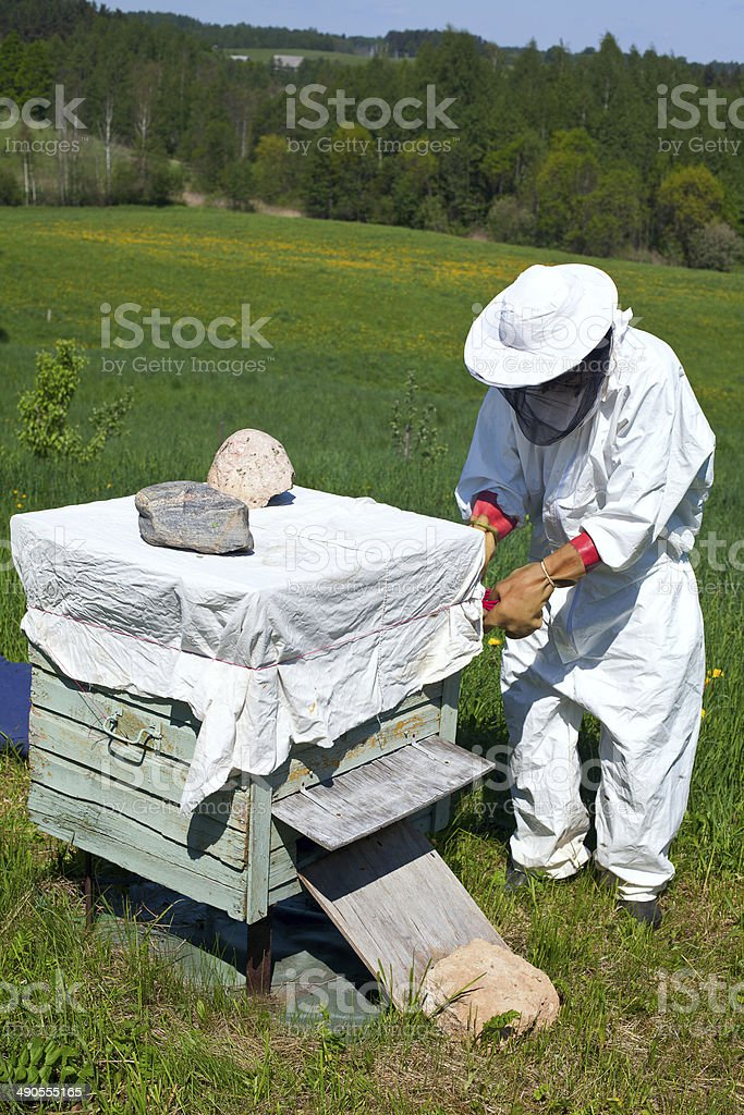 beekeeper works in his aplary royalty-free stock photo