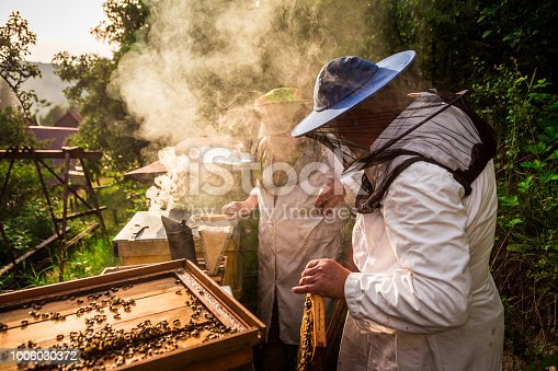 Close up color image depicting two professional beekeepers working outdoors and wearing the traditional protective suits used for beekeeping. He is holding up a fresh honeycomb outdoors next to his beehives. The honeycomb is covered with swarming bees. Smoke is swirling in the air (it is used to make the bees more docile) in this countryside image. Lots of room for copy space.