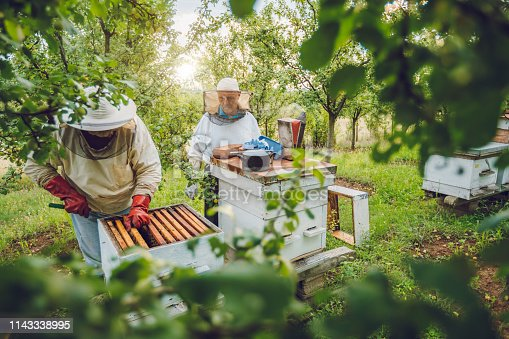 istock Beekeepers collecting honey 1143338995